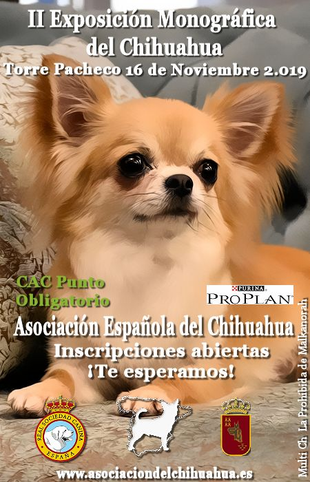 II EXPOSICION MONOGRAFICA NACIONAL ASOCIACION ESPAÑOLA DEL CHIHUAHUA